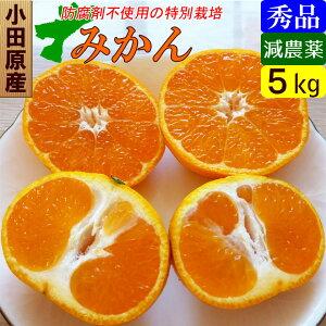 【送料無料】減農薬 温州みかん 秀品 5kg 贈答ギフトにも!