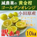 【送料無料】 神奈川産 特別栽培 ゴールデンオレンジ 黄金柑 10キロ 訳あり 小玉 規格外 減農薬