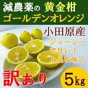 【送料無料】 神奈川産 特別栽培 ゴールデンオレンジ 黄金柑 5キロ 訳あり 小玉 規格外 減農薬