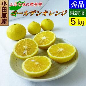 【送料無料】 神奈川産 特別栽培 ゴールデンオレンジ 黄金柑 5キロ 減農薬!