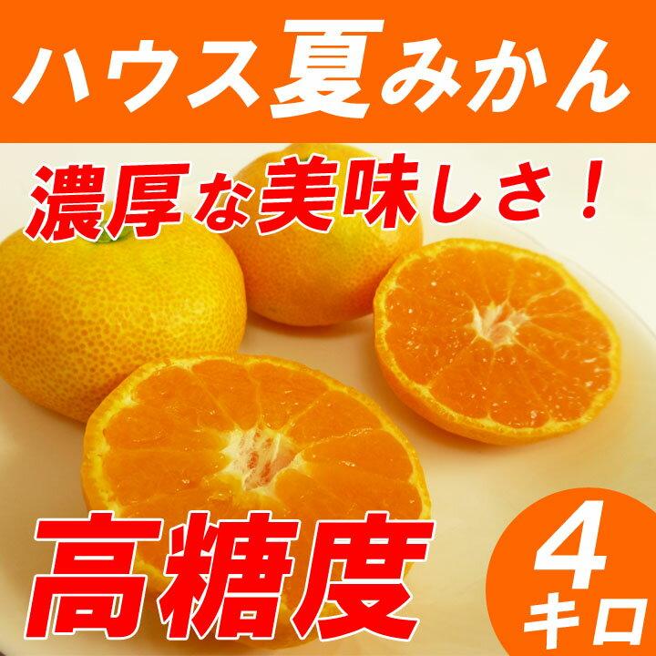 【送料無料】 ハウスみかん 4kg 高糖度の夏ミカン 神奈川産