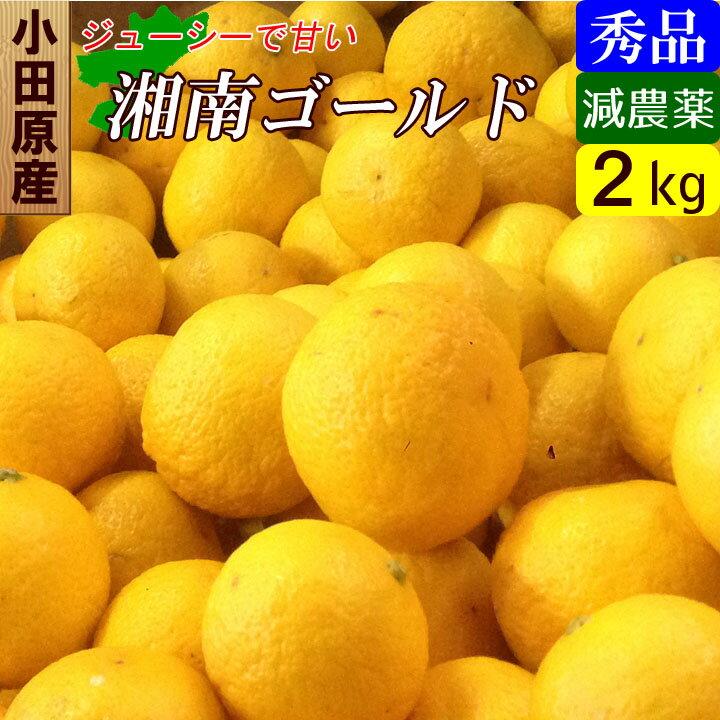 【送料無料】 神奈川産 特別栽培 湘南ゴールド オレンジ みかん 2キロ 減農薬!