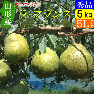 【送料無料】 山形県 西洋梨 ラフランス 大玉 5kg(秀5L 12玉) お歳暮に!