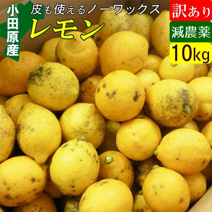 【送料無料】減農薬 国産レモン 訳あり 10kg 小田原産 ノーワックス 有機肥料 家庭用
