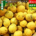 【送料無料】減農薬 国産レモン 訳あり 10kg 小田原産 ノーワックス 有機肥料 家庭用【黒斑点あり】】
