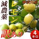 【送料無料】減農薬 国産レモン 訳あり 4kg 小田原産 特別栽培・有機肥料 家庭用