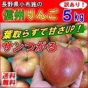 長野産 葉とらず りんご 訳あり 5kg 送料無料 リンゴ サンつがる