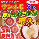 【送料無料】長野産 信州りんご 5kg 葉とらずリンゴ 小布施 サンふじ 蜜入り