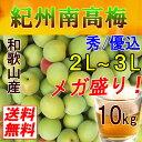 【送料無料】紀州和歌山産 南高梅 10kg 2L〜3L(秀・優込) 青梅【梅干し用・梅酒用】