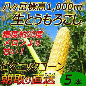 【送料無料】減農薬 八ヶ岳 生とうもろこし 5本入(ギ...