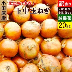小田原産 下中玉ねぎ 訳あり 20kg 特別栽培(減農薬)
