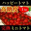 高知県 完熟 ハッピートマト (高糖度ミニトマト) 1kg 甘くておいしい!