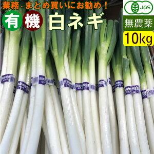 【送料無料】【箱買い】国産 オーガニック 有機 白ネギ 10kg 無農薬 白葱 有機野菜