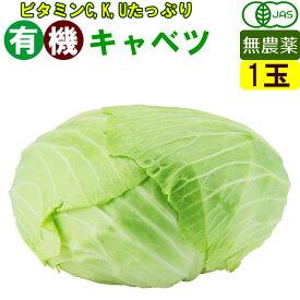 オーガニック 有機 キャベツ 1玉 無農薬 有機野菜