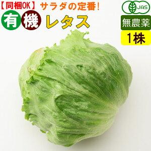 オーガニック 有機 レタス 1玉 無農薬 有機野菜