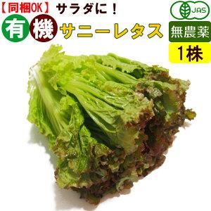 オーガニック 有機 サニーレタス 1玉 無農薬 有機野菜