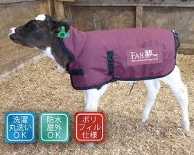 首まで温かい!子牛の防寒対策に!サーモー(保温カーフジャケット)