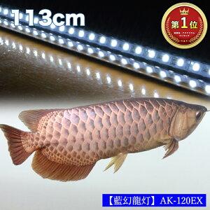 【ポイント5倍19日20時~26日2時】アロワナ ライト 金龍 過背金 120cm水槽用 藍幻龍灯 ワイルドブルー EX LED 2列 水中 照明 水中蛍光灯 アクアリウム 熱帯魚 アジアアロワナ ディスカス でんらい AK