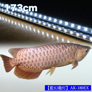 【ポイント20倍】アロワナ ライト 金龍 過背金 180cm水槽用 藍幻龍灯 ワイルドブルー EX LED 2列 水中 照明 水中蛍光灯 アクアリウム 熱帯魚 アジアアロワナ ディスカス でんらい AK180-EX