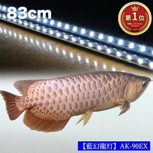【ポイント5倍19日20時~26日2時】アロワナ ライト 金龍 過背金 90cm水槽用 藍幻龍灯 ワイルドブルー EX LED 2列 水中 照明 水中蛍光灯 アクアリウム 熱帯魚 アジアアロワナ ディスカス でんらい AK9