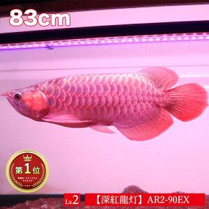 【ポイント5倍19日20時~26日2時】アロワナ ライト 紅龍 90cm水槽用 深紅龍灯 スーパーレッド レベル2 EX LED 2列 水中 照明 水中蛍光灯 アクアリウム 熱帯魚 アジアアロワナ ディスカス でんらい AR