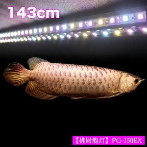 【ポイント5倍19日20時~26日2時】アロワナ ライト 金龍 過背金 150cm水槽用 桃財龍灯 ピンクゴールド EX LED 2列 水中 照明 水中蛍光灯 アクアリウム 熱帯魚 アジアアロワナ ディスカス でんらいPG1