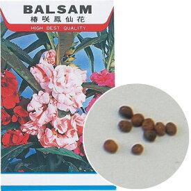 アーテック 花の種 ホウセンカ 苗床付 ATC-2743