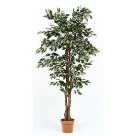 その他 観葉植物/フェイクグリーン 【フィカス B】 7号鉢対応 幅90cm 〔リビング ガーデニング〕【代引不可】 ds-1951467