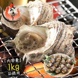 サザエ さざえ 中サイズ 1kg 天然 活 (1粒70〜80g/約13粒)福井県産