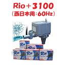 カミハタ Rio+3100 水中ポンプ (西日本用:60Hz) リオプラス