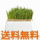 【19日9時59分までクーポン配布中】 HARIO 猫草栽培キット にゃんベジ 鉢+リフィル2パック 【送料無料】
