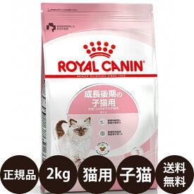 [ 正規品 送料無料 あす楽 ] ロイヤルカナン キトン 2kg [ FHN 成長後期の子猫用 子猫 猫 キャットフード ドライ ドライフード フィーライン ヘルス ニュートリション ROYAL CANIN ロイヤルかなん プレミアムフード ]