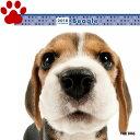 【6】2018年 国内版 THE DOG 壁掛け カレンダー ビーグル シール付き(2017年9月から18年12月) 犬種別 ザ・ドッグ ザドッグ