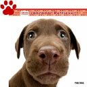 【6】2018年 国内版 THE DOG 壁掛け カレンダー ラブラドールレトリーバー シール付き(2017年9月から18年12月)…
