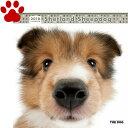 【6】2018年 国内版 THE DOG 壁掛け カレンダー シェトランドシープドッグ シェルティ シール付き(2017年9月から18年12月) 犬種別 ザ・ド...