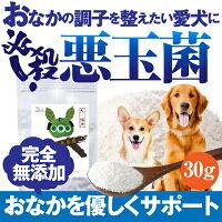 犬・ペット用乳酸菌腸サプリ(必殺悪玉菌)無添加【送料無料】