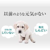 犬の無添加・サプリメント(みらいのヒトサジ)【送料無料】天然のサプリ猫・犬用肝臓・骨・関節・ダイエット・アレルギー