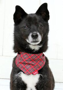 バンダナタータンチェックS452743送料無料バンダナ犬ドッグ小型犬可愛いおしゃれペット犬と生活レッド・グリーン【D】【B】【メール便】