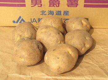 男爵 馬鈴薯 春作種芋1kg
