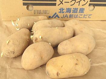 メークイン 馬鈴薯 春作種芋1kg