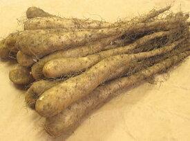 長いも種芋1kg