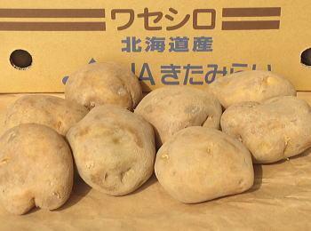 ワセシロ 馬鈴薯 春作種芋1kg