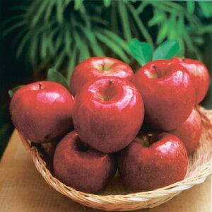 (自家用:予約販売・送料込:12月初旬から出荷予定)期間限定!信州りんご 特選完熟サンふじ10kg(約26個〜36個入)(信州長野のお土産 ご当地 お取り寄せ ギフト 林檎 苹果 リンゴ)