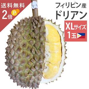 毎週輸入中!準備ができ次第出荷 フィリピン産 ドリアン XLサイズ 1玉 約3〜4kg 生鮮 生 生ドリアン 送料無料 durian プヤット種