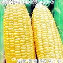 【とうもろこし 北海道産 送料無料】【ピクニックコーン】北海道トウモロコシ 10本【空輸】収穫日発送【翌日】お届け…
