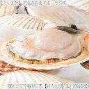 【送料無料 活ホタテ 北海道産】【天然 活帆立】道東オホーツク産 4kg 20枚前後【殻付き帆立】流氷の海で育った肉厚物…