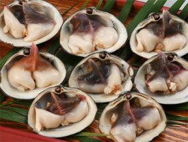 【送料無料】北寄(ホッキ)貝お造りセット 7個「※沖縄へお届けの場合は別途送料880円がかかります。」