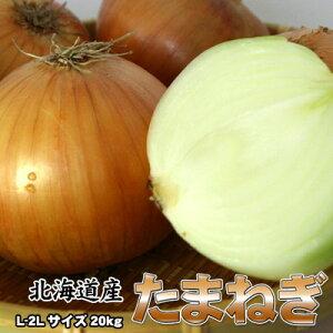 たまねぎ 送料無料 20kg 玉ねぎ 玉葱 タマネギ 北海道産 L-2Lサイズ ※沖縄送料別途加算
