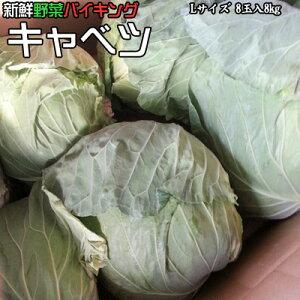 新鮮野菜 バイキング キャベツ Lサイズ 8玉入8kg 送料無料 ※沖縄は送料別途加算