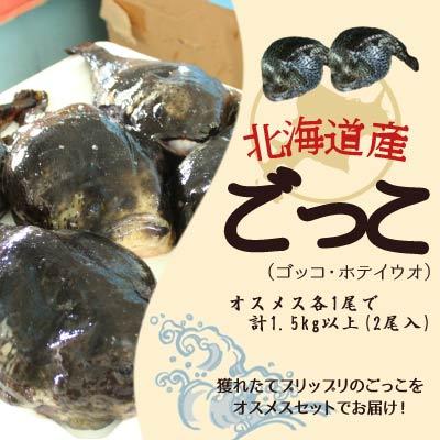 ゴッコ ごっこ 布袋魚 送料無料 オススメス各1尾で計1.5kg以上(2尾入) ※沖縄送料別途加算